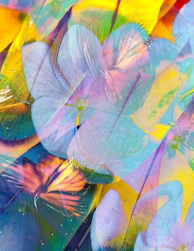 federn mariposa blueten