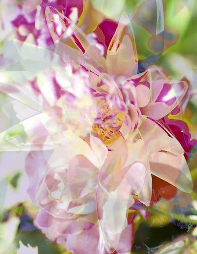 stanko seerose-rose-gruen-3