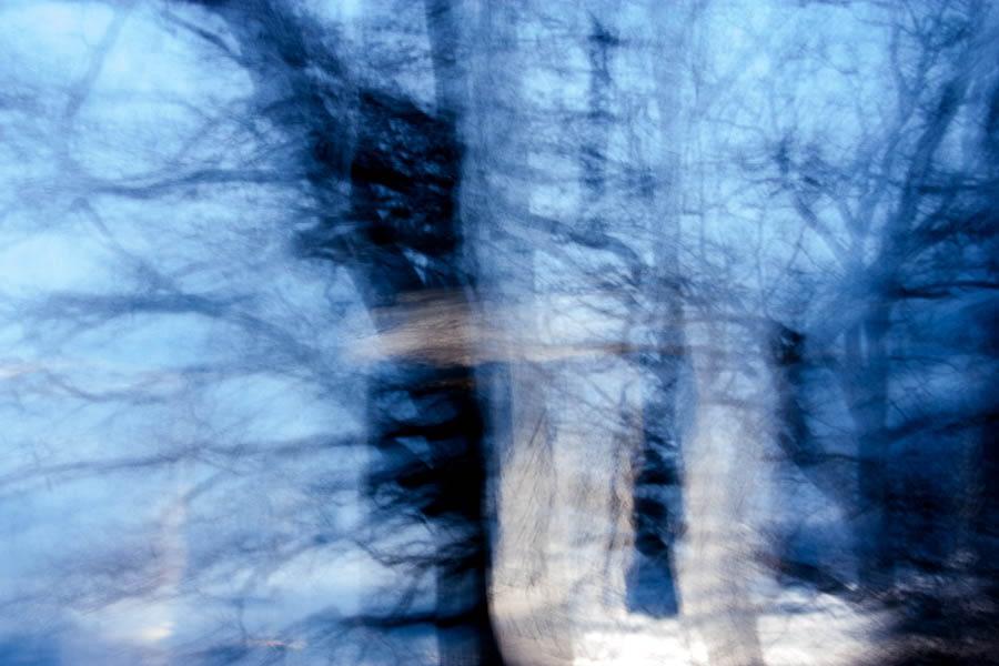 waldspaziergang bäume