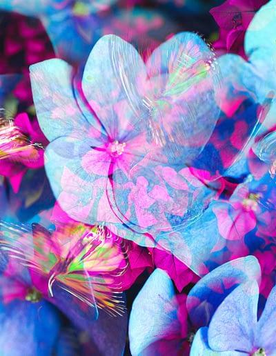 blueten mariposa