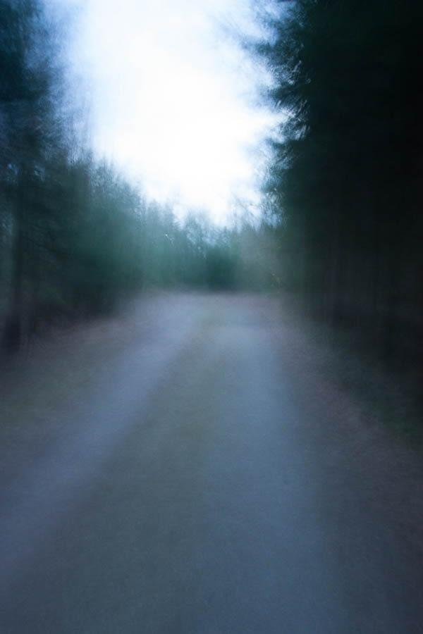 Waldspaziergang 14