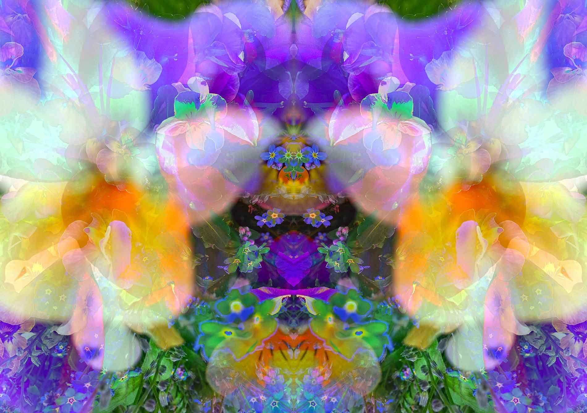 holy lilien-veilchen